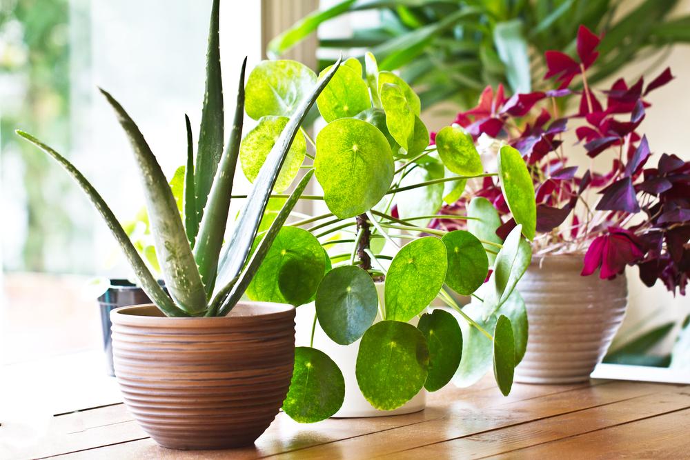 Vous aimez les plantes (ou vous avez envie de découvrir si vous avez la main verte), vous aimez le DIY, vous voulez profitez de vos vacances pour réaliser un ou deux projets, cet article est donc fait pour vous ! On a sélectionné pour vous 5 DIY qui mettent les plantes à l'honneur mais dans lesquels vous trouverez également de bons conseils.